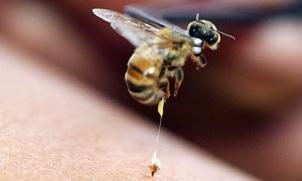 vabzdžių ant varpos nuotrauku vyru narys po priartinimo