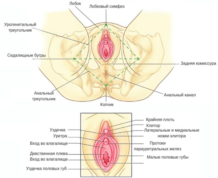 kaip padidinti vyru lyties organu organa