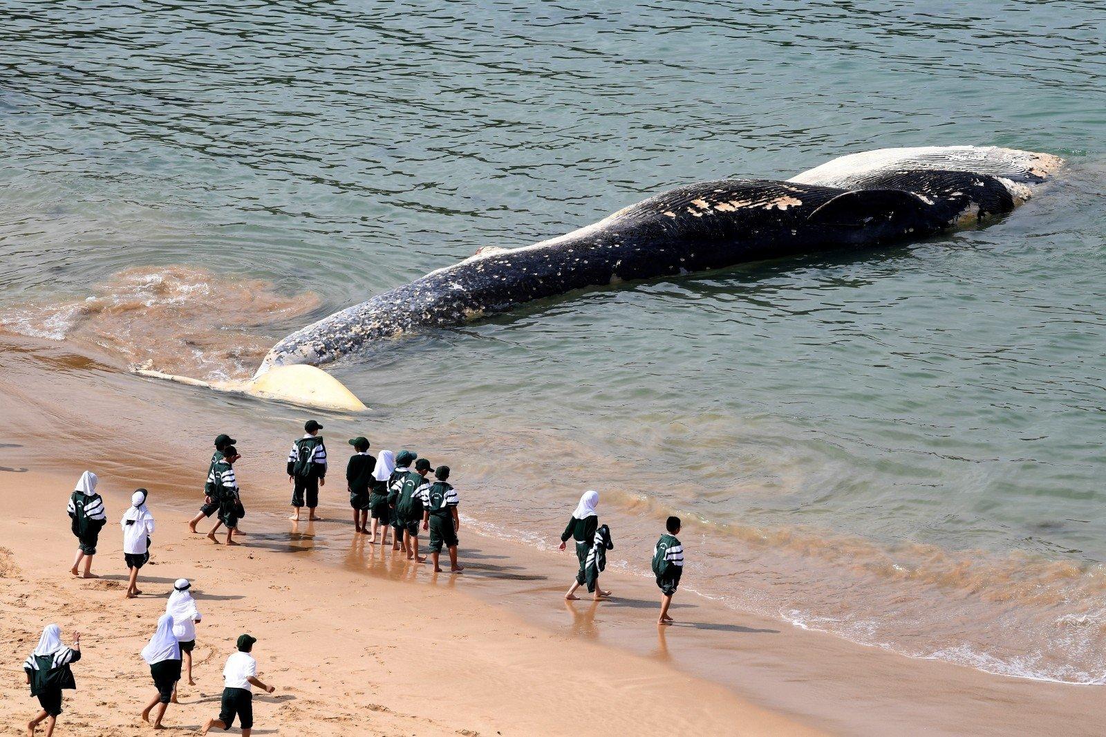didžiausi varpos banginiai