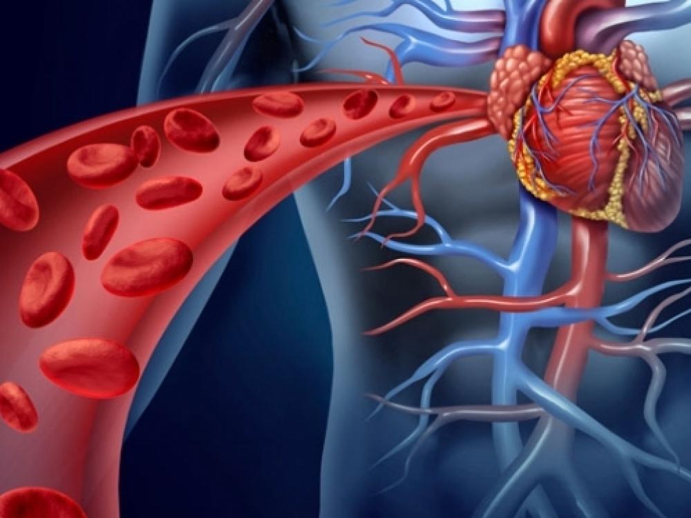 kraujo krešulys varpos venoje naked phenio dydziai